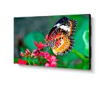 """NEC UN492S 49"""" Ultra-Narrow Bezel IPS LED LCD Monitor"""