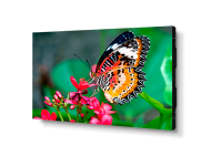 "NEC UN492S 49"" Ultra-Narrow Bezel IPS LED LCD Monitor"